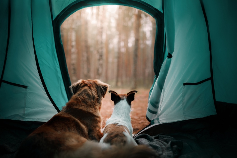 Paws and Listen: Tips for Travelling With Pets - PD Insurance