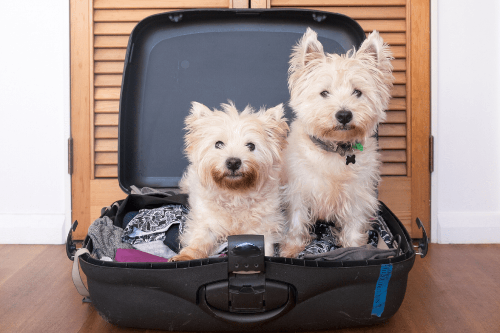 Separation Anxiety in Pets How to Help Them no.2