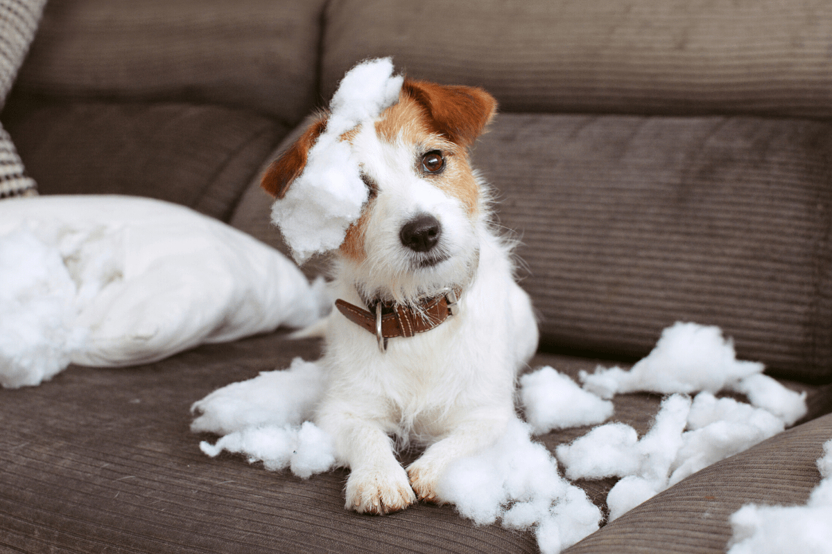Separation Anxiety in Pets How to Help Them