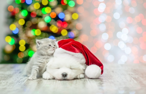puppy in santa hat with kitten rubbing against him