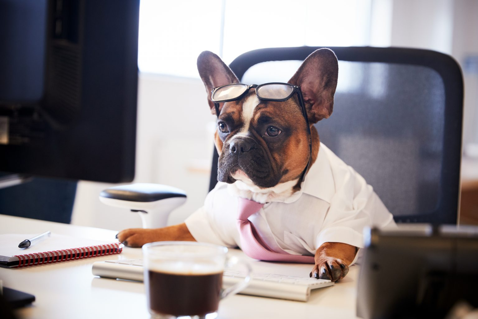 Tips For Taking Your Dog to Work - PD Insurance