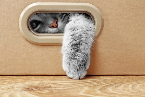 grey cat lying in box poking paw through gap