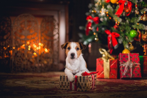 small dog in front of Christmas tree and fireplace with gifts