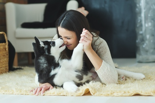 PD Insurance: 7 Steps to Being the Purrfect Pet Parent in 2021