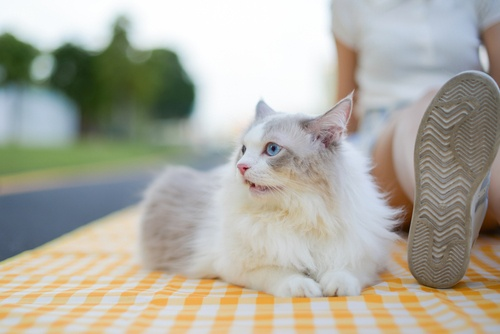 Friendliest cat breeds to welcome to your household