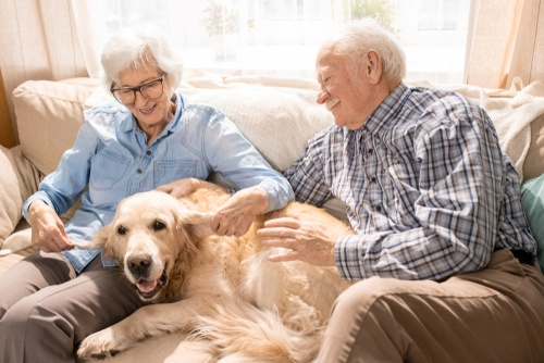 Senior Pet Parents – Contingency Plans for Your Pet