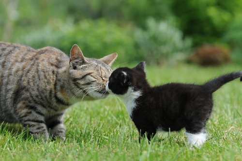 Kitten and cat introductions are crucial to get right - they form the bedrock of a cat relationships.