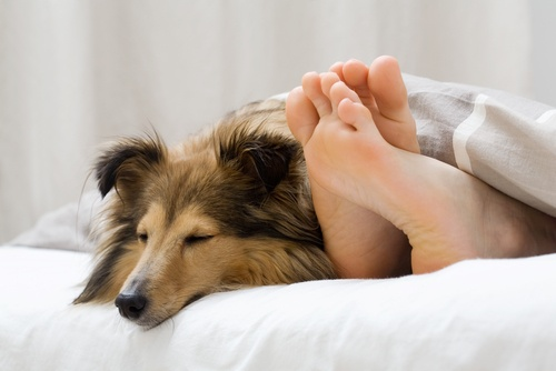 having your dog with you in bed can be a way to spend quality time together.