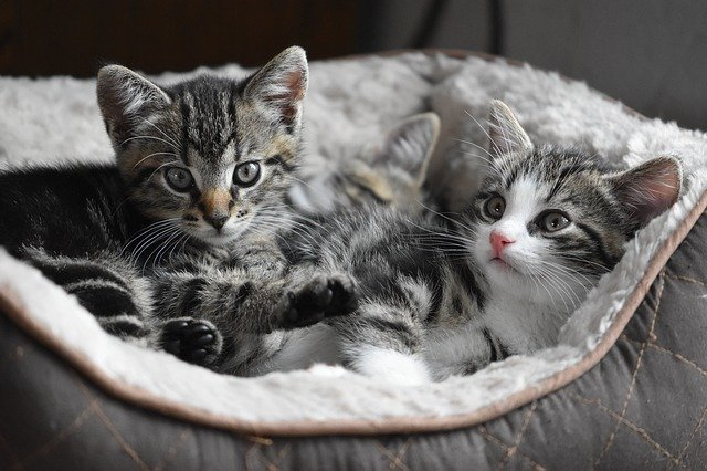 one or two kittens feature image