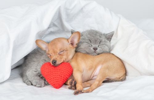 This pup and kitten are celebrating Love your Pet Day with an afternoon nap.