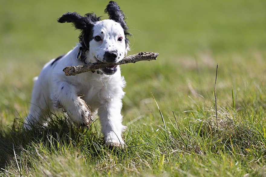 This pooch is burning up excess energy and learning skills through puppy play.