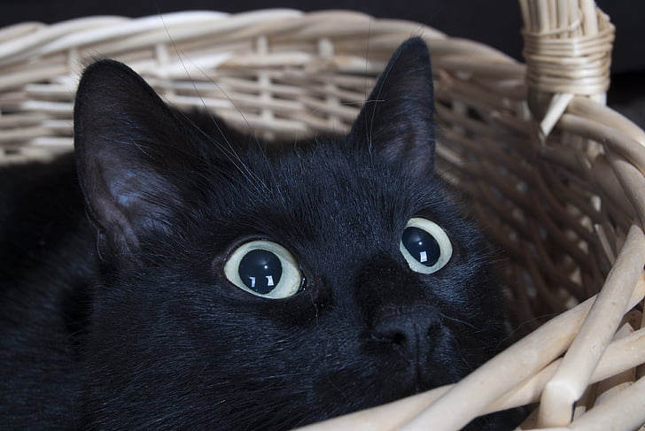 Another shared cat-human trait, dilated pupils show excitement. Although if this is paired with growling or hissing, then it can represent high alert defensive behaviour.