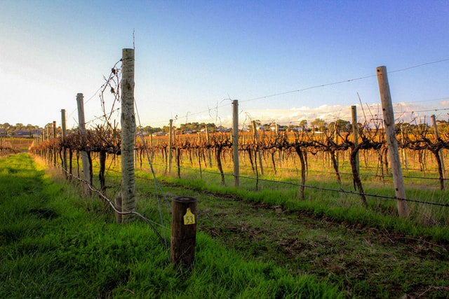 wine regions are one of the best getaways in south australia