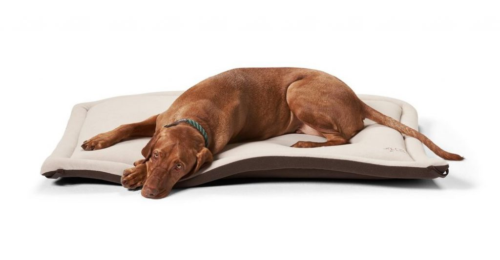 try this dog floor mat to keep him warm.