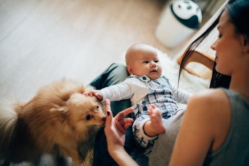 A parent practices ways to introduce your dog to your baby.