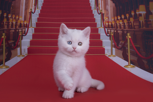 One of the most famous cats in history
