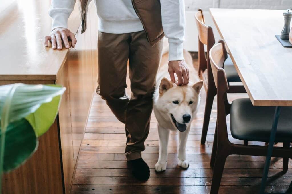 pet parent gets custody of dog with a pet prenup