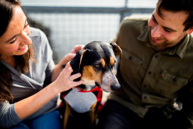 A couple gets a pet prenup for their dog