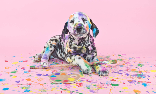 dalmatian puppy sitting in pet art and craft paint on pink background