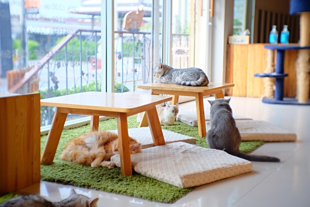 cats relax at a cat café