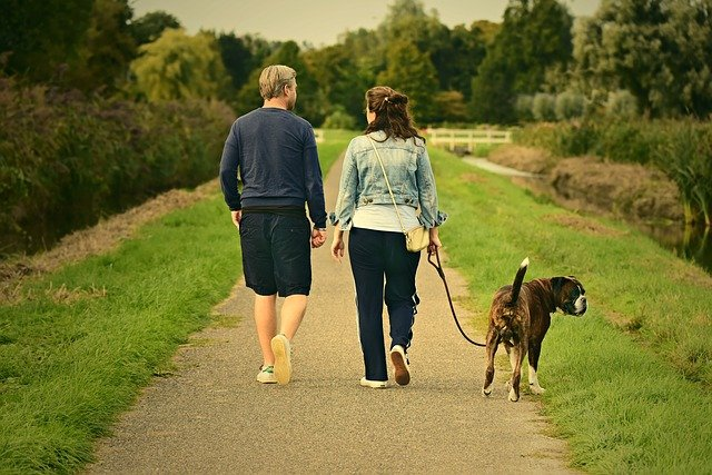 couple walking dog on lead without pulling