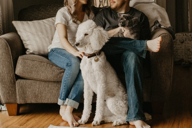 pets and breakups are hard to imagine in happy times