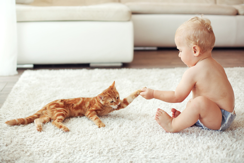 ginger cat playing with baby